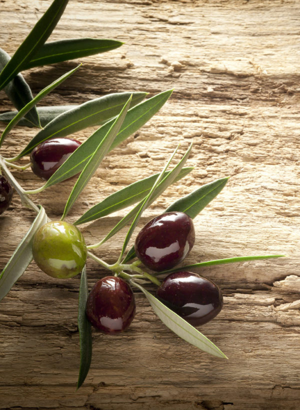 olivewoodbranch
